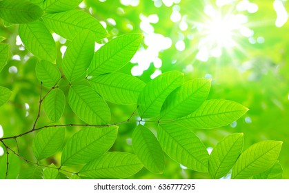 tropical tree leaves over nature green environment for background design