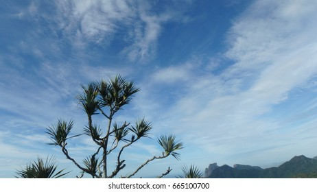 Tropical tree on mountain blue cloudy sky background