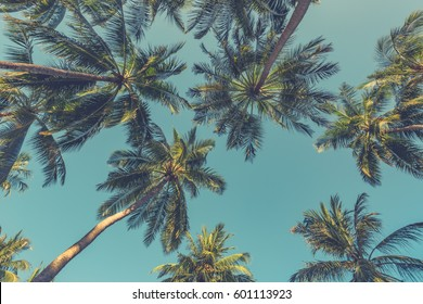 Tropical trees background concept