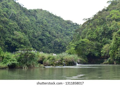 Tropical trees lining the banks of Loboc River in Bohol, Philippines