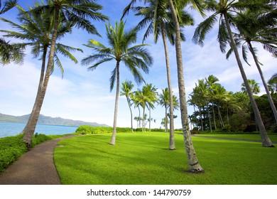 Tropical trees on island resort
