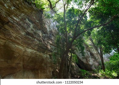 Tropical trees stand high next to rocky cliff in Chiapas, Mexico jungle as sunlight pours over