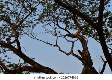 tropical trunk and branches in blue sky as background