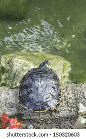 Tropical Turtle River pond, animals and nature