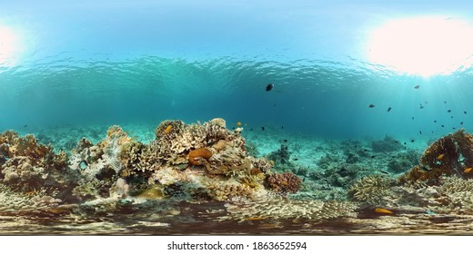 Tropical underwater sea fish. Colourful tropical coral reef. Scene reef. Philippines. Virtual Reality 360.