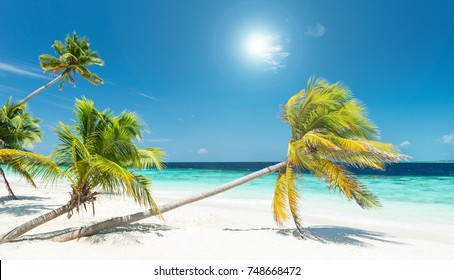 tropical untouched beach with beautiful palm trees