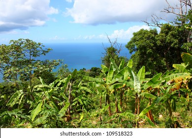 Tropical vegetation and forest scenery on the Caribbean island of Tortola