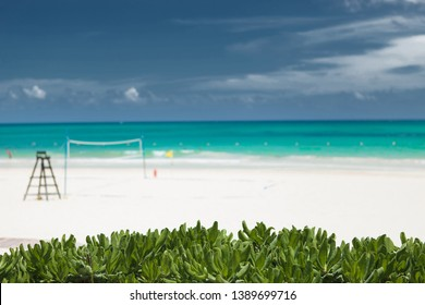tropical vegetation in fron of a beach voley field in tulum, mexico