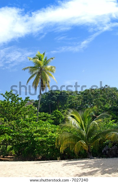 Tropical vegetation growing along a secluded beach.