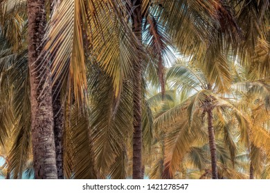 Tropical vintage palm tree beach summer background