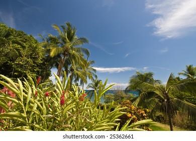 Tropical vista in Montezuma, Costa Rica