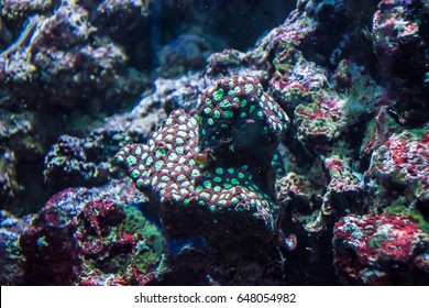 Tropical water plants red and green coral anemone flora sea
