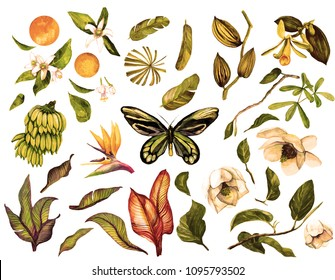 Tropical Watercolor Vintage set with isolated objects, banana branch, orchid, liana, butterfly, magnolia, banana leaves, flower sterilization, orange, neroli, orange flower.