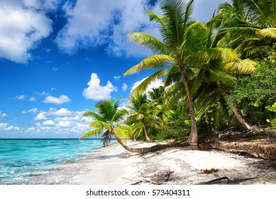 Tropical white sandy beach with palm trees. Saona Island, Dominican Republic