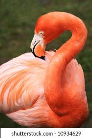 tropical wild bird flamingo pink orange colorful