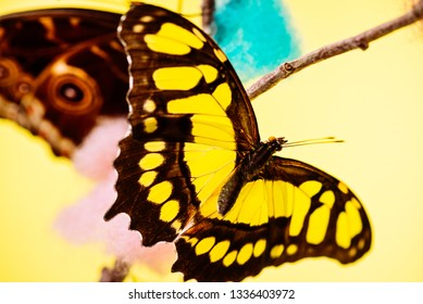 Tropical yellow butterfly sitting on the colored bush over yellow background