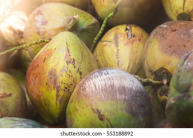 Tropical Yellow Coconuts