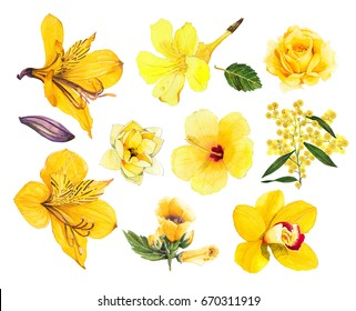 Tropical yellow flower Alstroemeria  yellow trumpet  rose  orchid  wattle  magnolia  hibiscus