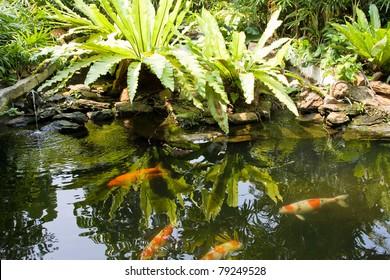 Tropical zen garden view with green plants