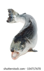 trout fish with open mouth on a white background