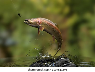 Trout fish in river jumped for bait sport fishing