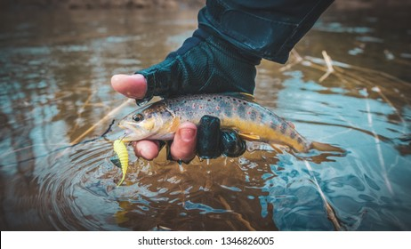 Trout in the hand of angler.