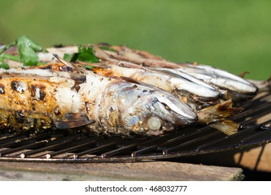 Trout on grill directly taken from water