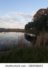 A trout pond in Dullstroom with trees and  blue sky in the background