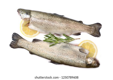 Trout raw fish with lemon and rosemary isolated on white background