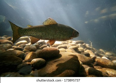 a trout swimming at a local nature center