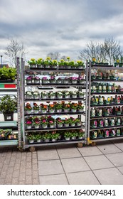 Trowbridge Wiltshire UK February 04 2020 Racks of plants and flowers for sale outside a B&M homestore and garden centre in Trowbridge Wiltshire