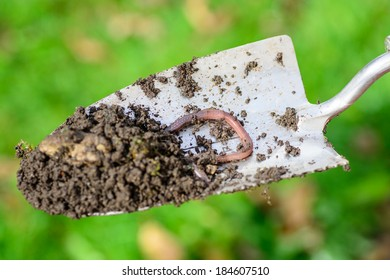 A trowel with an earth worm and soil on a green garden background