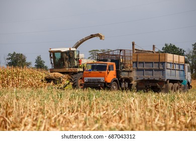 Truck and harvester harvest corn on the field on a hot day