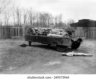 A truck load of bodies of dead prisoners of the Nazis, at Buchenwald concentration camp. April 14, 1945, Germany, World War 2.
