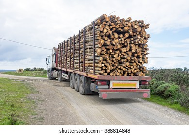Truck with load of tree trunks of eucalyptus
