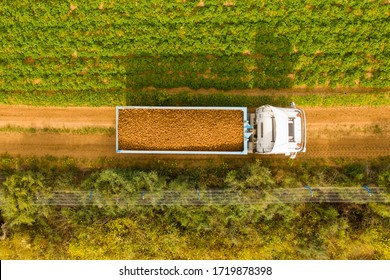 Truck loaded with fresh picked Potatoes crossing a filed, Aerial image.