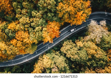 Truck passing on a road in fall season