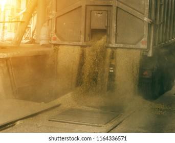 A truck unloads grain at a grain storage and processing plant, a grain storage facility, unloading grain, facility