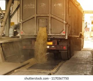 A truck unloads grain at a grain storage and processing plant, a grain storage facility, unloading corn, factory