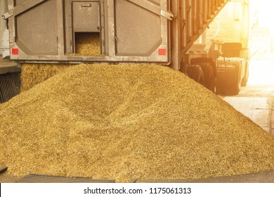 A truck unloads grain at a grain storage and processing plant, a grain storage facility, unloading seed, plant