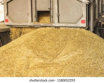 A truck unloads grain at a grain storage and processing plant, a grain storage facility, unloading corn production