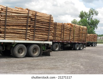 Trucks with load of tree trunks of eucalyptus. Rosario city, Argentina