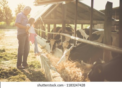 True values ​​are acquired in younger years Granddaughter and grandfather on the farm together. Close up. Copy space.