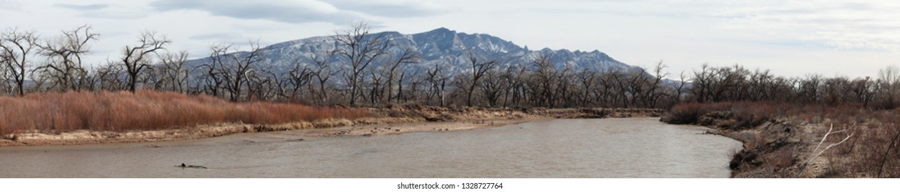 """True wide panorama of the Sandia Mountains in late winter, seen from the Rio Grande River """"Bosque""""....the lowlands next to the river, with trees bare of leaves and the water low in the river."""