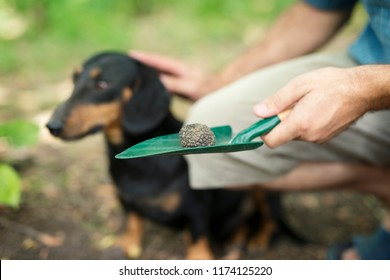 Truffle hunting. Man thanking his trained dog for helping him to find truffle mushroom in forest.