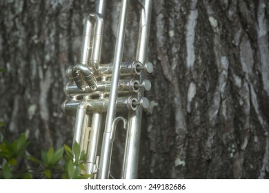 trumpet leaning on a sweetgum tree in a bed of gardenias