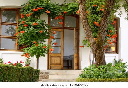 Trumpet vine (Campsis radicans) above door entry into house from garden with flowers