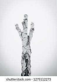 Truncated birch tree in black and white textured with dark vingette for a foggy lonely effect showing the consequenses of climate change.