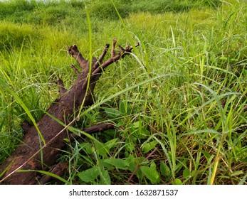 a trunk in the bush