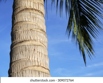 The trunk of a coconut tree